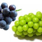 ガン抑制効果や動脈硬化予防・疲労回復にブドウ