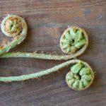 貧血や便秘改善に春の山菜の「ぜんまい」